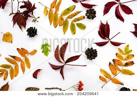 Pile Of Autumn Leaves, Pine Cones Nuts Over White Background. Collection Beautiful Colorful Leaves B