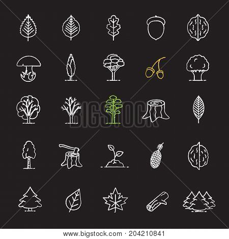 Tree types chalk icons set. Forest, park. Forestry. Isolated vector chalkboard illustrations