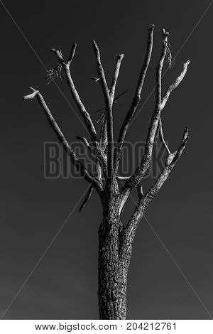 Skeletal tree against a dark sky in monotone