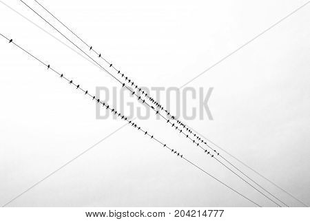 A flock of birds sits on wires