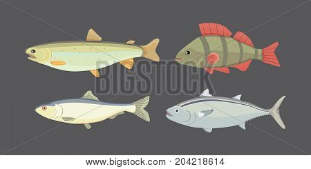 Isolated river fish. Set of freshwater sea cartoon fishes. Fauna ocean illustration