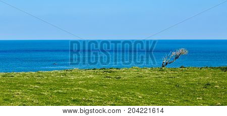 Green coastline located in the bay of Morlaix in Northern part of Brittany France.