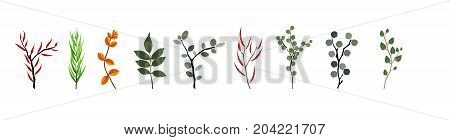 Tropical elements Agonis, Eucalyptus, Annona, Balata, Zamiokulkas Cissus Colorful naturalistic pictures Vector Illustration EPS10
