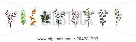 Tropical elements Agonis, Eucalyptus, Annona, Balata, Zamiokulkas Cissus Colorful naturalistic pictures Vector Illustration EPS10