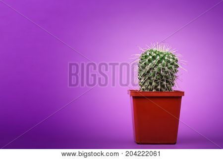 This cactus family comprising about one hundred twenty seven genera with some one thousand seven hundred fifty known species of the order.