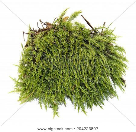 Fresh Juicy Green Moss Isolated On White