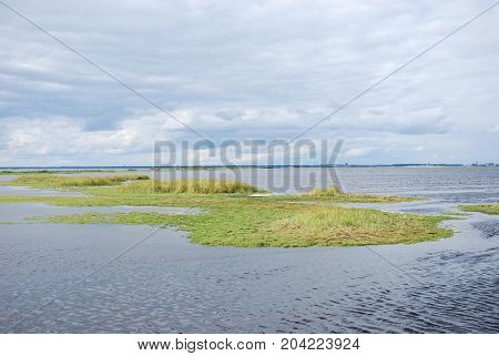 Green coastal marshland at the swedish island Oland in the Baltic Sea
