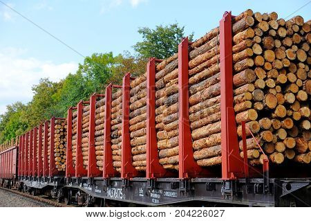 A freight train loaded with pine trunks