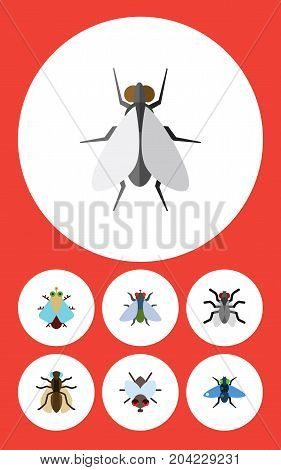 Flat Icon Housefly Set Of Fly, Gnat, Tiny And Other Vector Objects
