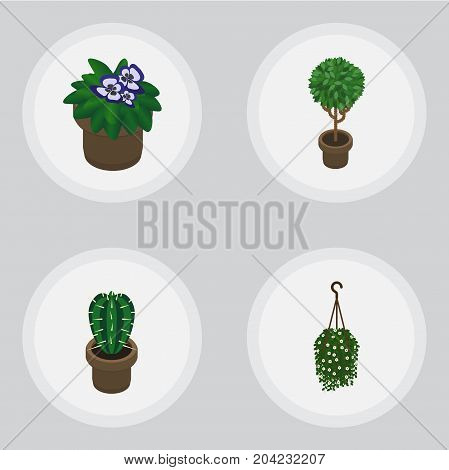 Isometric Houseplant Set Of Peyote, Flowerpot, Tree And Other Vector Objects