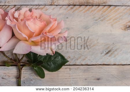 Fresh bunch of pink roses flowers on wooden background. Pastel floral wallpaper background from flower petals. Trendy color. Bloom love concept