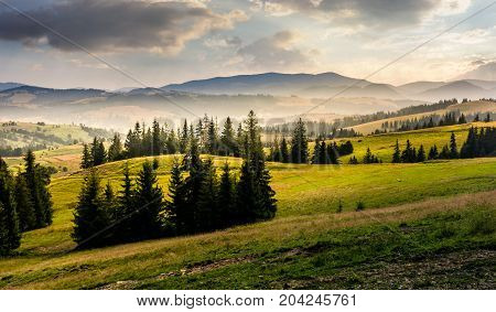 Spruce Forest On Hills At Foggy Sunrise