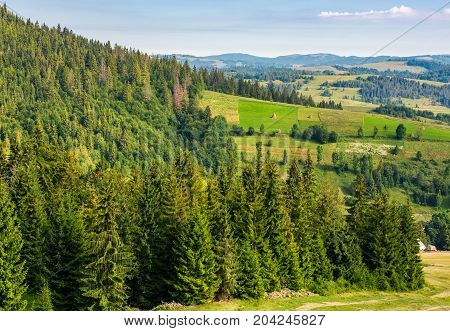 Spruce Forest On Hills In Countryside Area