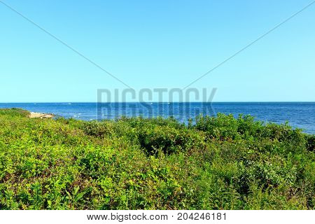 Dune foliage protecting the shore at Montauk Point, Long Island, New York