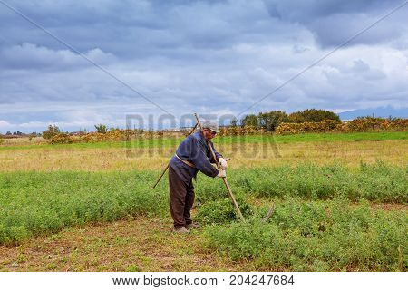 Portrait Of An Elderly Gray-haired Man Who Mows Scythe Grass In A Meadow.