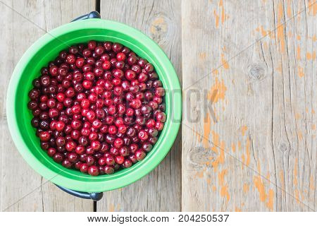 fresh harvest of ripe burgundy red cherry in a green plastic bucket