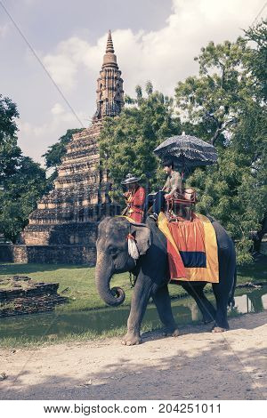 AYUTTHAYA THAILAND - SEP142017 : tourist riding on elephant back most popular activities in ayutthaya province one of world heritage site in thailand
