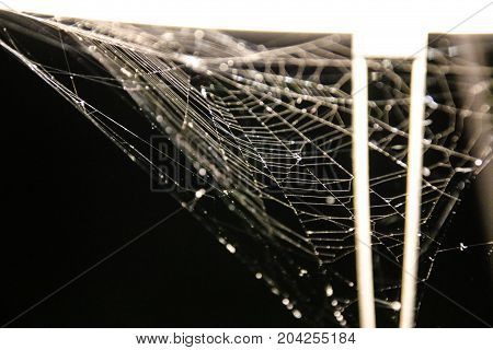 Every vampire must have this: A spider's web at the office lamp in the office.