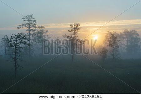 Sunrise over Konnu Suursoo bog on foggy morning Harju county Estonia