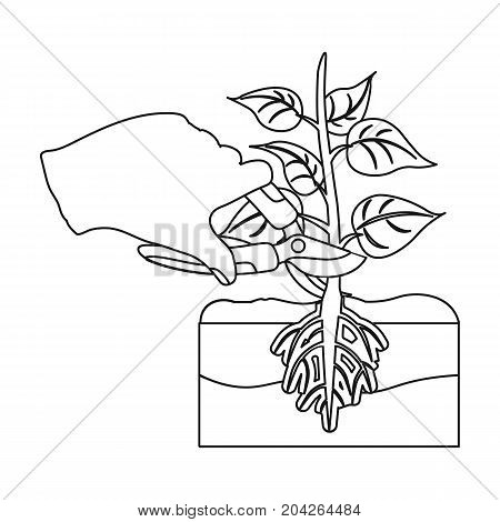 Plants, single icon in outline style .Plants, vector symbol stock illustration .