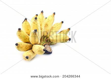Cultivate yellow Asian banana on isolate white background