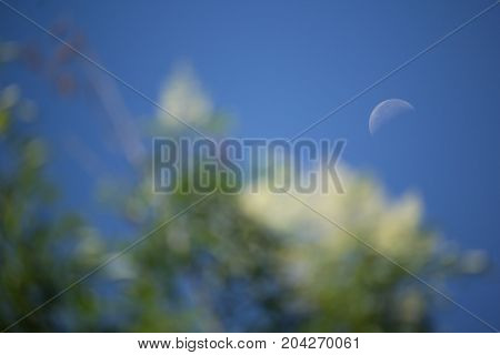 The Moon And Blurry Of Fraxinus Griffithii Tree