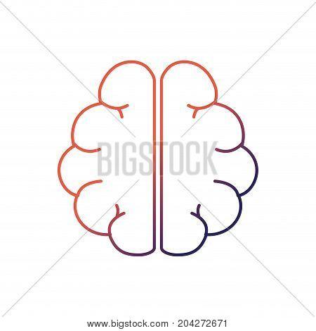 line anatomy brain to imagination and memory inspiration vector illustration