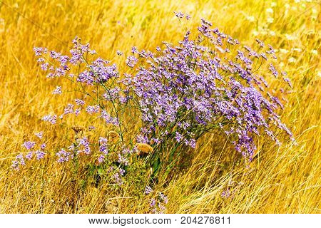 Flowers In Steppe. Background Landscape Beautiful Blue Polye Closeup Growing In Steppe.