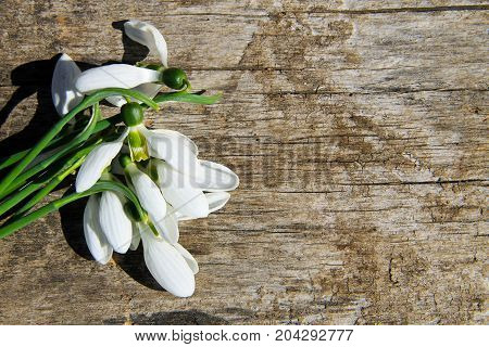 Bouquet Of White Snowdrops On Wooden Background