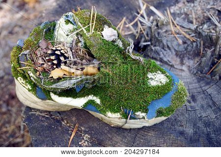 old ragged sneaker overgrown with green moss on a dry stump