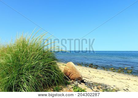 Green dune grass on the beach at Montauk Point, Long Island, New York