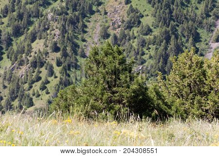 slopes of the mountains with trees in Kazakhstan