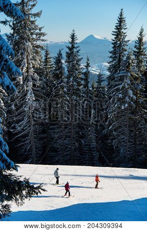 Three Skiers Riding Down On The Slope At Ski Resort Route Among The Mighty Forest On A Sunny Day In