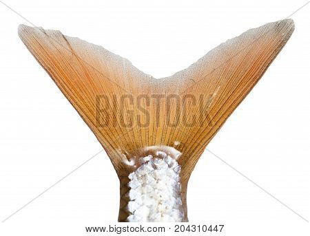 tail of a fish on a white background