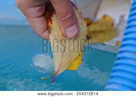 Human hand cleaning outdoor swimming pool from fallen autumn leaves