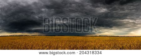 A round storm cloud over a wheat field. Russia