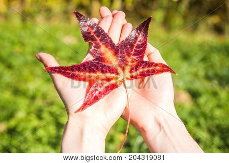 Red autumn leave in girl hands, selective focus