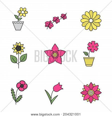 Flowers color icons set. Lotus, crocus, chamomile, sunflower, daffodil, hibiscus, orchid branch, tulip, poppy. Isolated vector illustrations