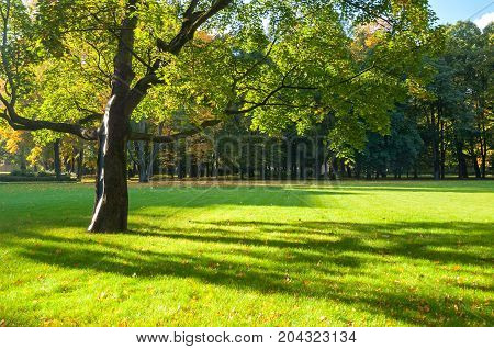 Fall background - colorful fall trees in sunny weather. Sunny fall trees in the fall park lit by sunshine. Early fall landscape in nice weather. Fall background of park fall trees under sunlight