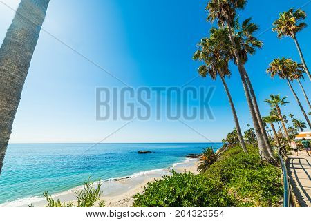 Palm trees in Laguna Beach shoreline. California USA