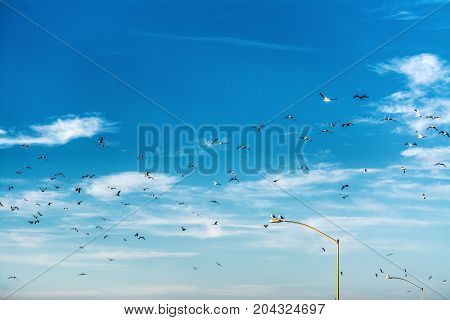 Flock of seagulls flying over la Jolla coastline California