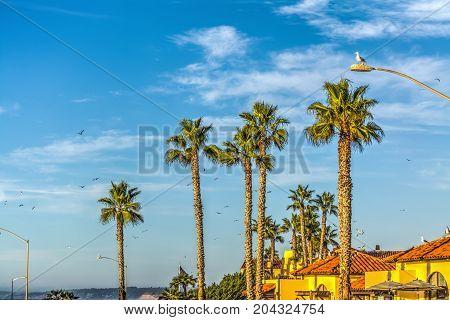 Palm trees in La Jolla beach California