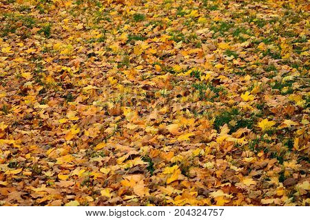 Autumn alley among yellow and brown leaves.