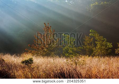 Rays Of Sunlight Shine Through The Trees On A Foggy Morning In Autumn