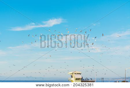 Flock of seagulls flying over a lifeguard hut in La Jolla beach California