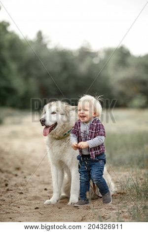 Little boy stands near sitting malamute dog on walk along forest road and laugh joyful.