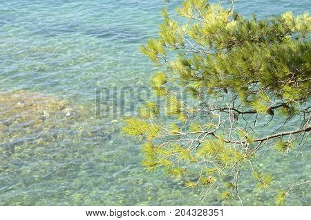 Green leaves and transparent water of the Mediterranean sea in Cadaques Girona Catalonia Spain.