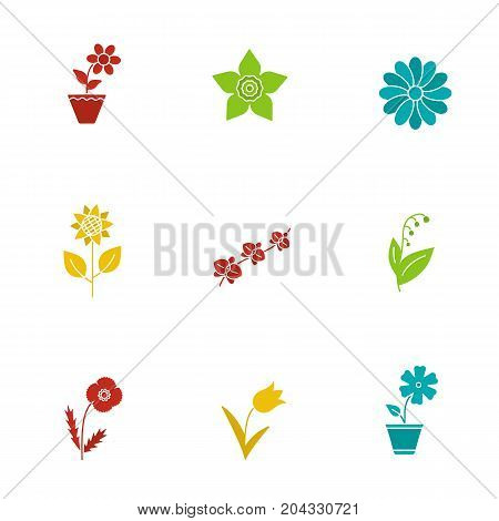 Flowers glyph color icon set. Crocus, hibiscus, narcissus head, chamomile, sunflower, orchid, may lily, poppy, tulip. Silhouette symbols on white backgrounds. Negative space. Vector illustrations