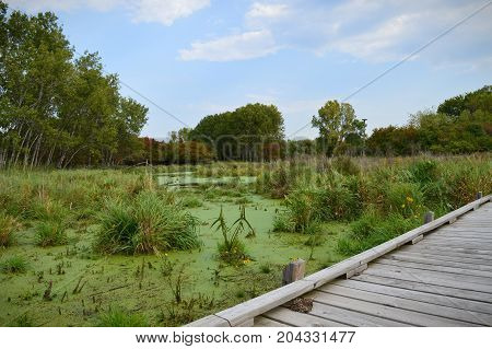 A boardwalk in the wetland during early autumn