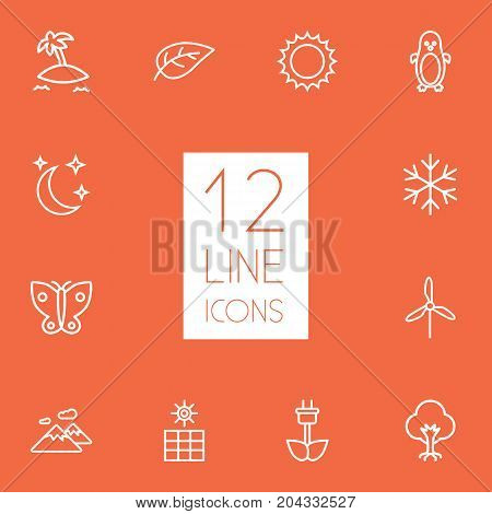 Collection Of Sun, Wood, Butterfly And Other Elements.  Set Of 12 Natural Outline Icons Set.